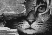 Amor de um gato