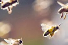 Trees For Bees / Flowering trees for bees and other pollinators