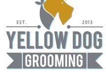 Yellow Dog Grooming / Yellow Dog Grooming: Inspiration & Admiration