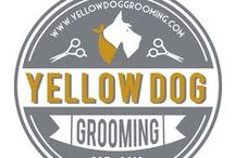 Yellow Dog Treats  / Good things for good dogs to eat