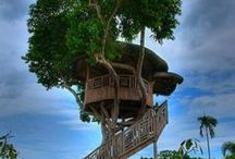 DOMKI NA DRZEWIE / Zbieram wszelkie projekty domków na drzewie