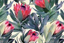 Botanicals / Botanical Illustrations Photographs