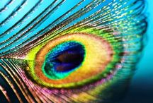 Peacock / by DJ♛Tomoko Horii