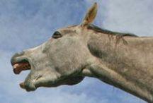 Horses / #horses