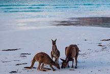 Australien / Die besten Tipps für Down Under, die schönsten Strände an Australiens Küsten, Tipps und Tricks für Backpacker und rund um Work-and-Travel-Visum.