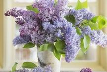 Lilac / I can almost smell