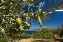 "Micro-climates of Crete / Crete owes its micro-climates to its mountainous nature, including several plateaus and low lying coastline. It is generally classified as a ""Mediterranean climate"" with hot dry summers and cool wet winters. http://goo.gl/x0WtOV"
