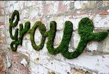 Sprouting Garden