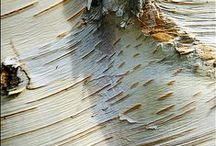 Tree Bark, Rust and Related Textures