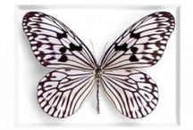 butterflies have a very short life and yet it is good enough for them