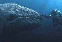 ::: I Dream of the Sea :::