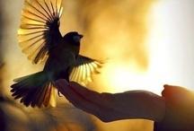 ::: CREATURE /// Bird ::: / Wild & Domestic