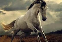 ::: CREATURE /// Horse ::: / Horses Wild & Domestic