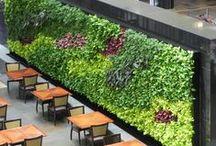 Hanging gardens / Vertical gardens