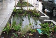 Rain gardens / Blue and green solutions