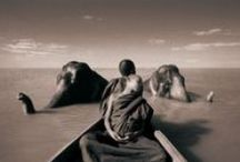 ::: PHOTO /// Gregory Colbert ::: / Gregory Colbert (born 1960 in Toronto) is a Canadian Photographer/Filmmaker best known as the creator of Ashes and Snow.  Colbert sees himself as an apprentice to nature. His works feature cinematic visions of cohabitation with the natural world. - Wordless Poetry.