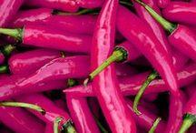 Rosa Dexanet / Fuchsia, magenta, rosa i colori della nostra agenzia web di Brescia!
