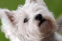 Pet Friendly Escapes / Cottages where dogs are given the five star treatment.