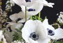 Bloemen / Bloemen en ander moois