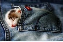 Cats are the best! / by Maureen Mattson