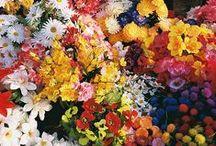 Gardens, flowers & fruits / by Patrizia Rossini