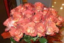 Buchete de flori - Florarie Vaslui / Un buchet de flori daruit unei persoane dragi are puterea de a transmite cele mai sincere si curate sentimente. Un buchet de flori dariut naste emotii!