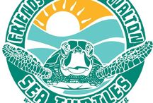 Friends of South Walton Sea Turtles Org Images / Organization images