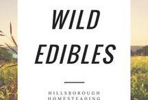 Foraging Wild Edibles / Wild edibles, identification and recipes. Medicinal qualities included.