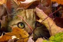 Autumn / Beautiful Photos