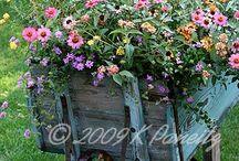 Tutto  in fiore / Giardini