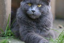 Grossi gatti
