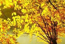 Fantastic Fall / by Karen Gentile