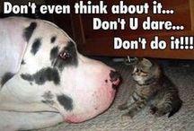 Funny Pets