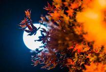 la notte e la luna