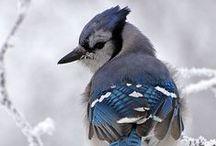Birds / by Wencys Macías