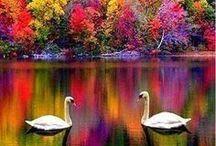 Beautiful Scenes / by B Mac