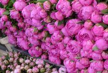 Jardines espectaculares / Jardines que apasionan