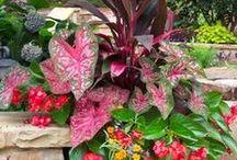 Garden / Plant