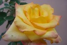 O jardim de Lui / Gosto de cultivar flores e amigos.