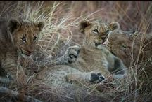 Specialised Safaris / Specialised Safaris on offer - walking, photographic, birding & conservation safaris with professionals in each field ...