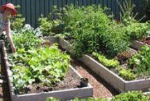 Veggie Garden / Tips, instructions, and ideas for our vegetable garden.