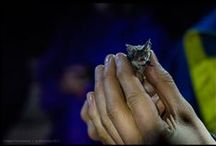 Melbourne Microbats / Eating up 600 mosquitoes an hour is just one of the ways the tiny, fragile microbat helps keep the balance in our ecosystem. Discover more about the Melbourne Microbat here: http://bit.ly/Microbats