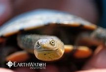 Turtles on the Move - Melbourne / Explore the wetlands and lakes in and around Melbourne to help determine the population status of our local freshwater turtles. Book your spot at: http://bit.ly/MelbTurtles