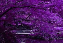 Plum Crazy / Passionate, Pulsing, Powerful. Shades of purple,  Plum to periwinkle... Enlivens the senses.