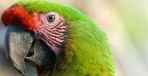 Ref: Parrots & Macaws