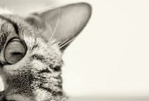 CATsen / ♥ Katzen, Cats, Gatti, Gatos, Chats, Kо́шка, 猫 ♥