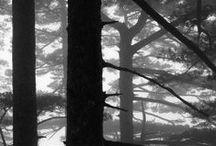 Bäume / Trees, Alberi, Arbres, Árboles, де́рево, 树