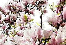 ♡ Tuin- Plantjes en Bomen