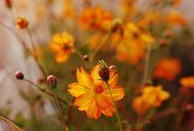 ♡ Kleur- Oranje