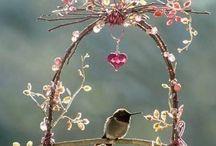 ♡ Vogeltjes